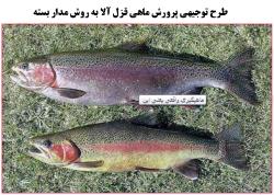 طرح توجیهی پرورش ماهی قزل آلا