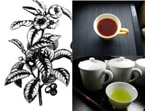 پاورپوینت بررسی جامع چای